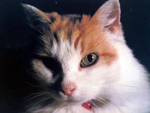 Tinkerbell the Buddha Cat Dog